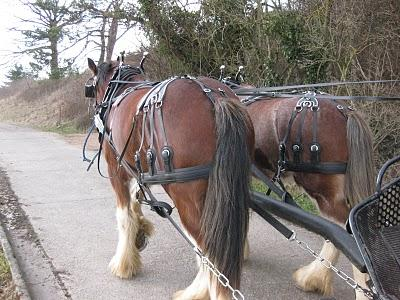 Amish Harness and Horsecollars - Amish Harness Discount Prices